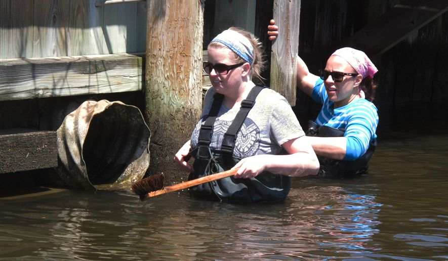 In this May 19, 2016 photo, employees of the New Jersey Department of Environmental Protection, work to scrub jellyfish polyps from a bulkhead in a lagoon in Brick, N.J. The state is enlisting homeowners in an effort to kill jellyfish when they are young and tiny, before they can explode into millions of adult jellyfish in the state's inland waterways. (AP Photo/Wayne Parry)