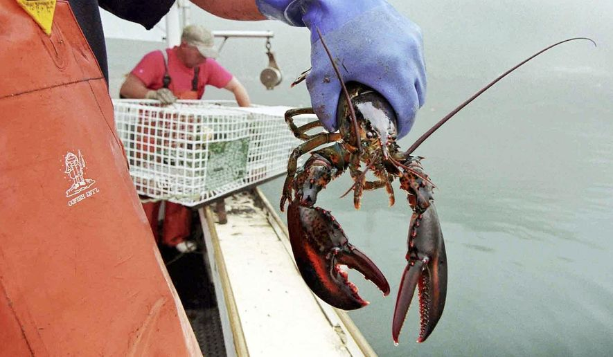 In this undated file photo, a sternman holds a lobster caught off South Bristol, Maine. Live lobster prices are high in New England and beyond as fishermen eagerly await the summer arrival of the region's beloved crustaceans, which could come slightly early and send prices down. (AP Photo/Robert F. Bukaty, File)