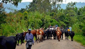 With investment, the DRC could be a major exporter of food and agriculture products. (Photos:Jean Tigana)