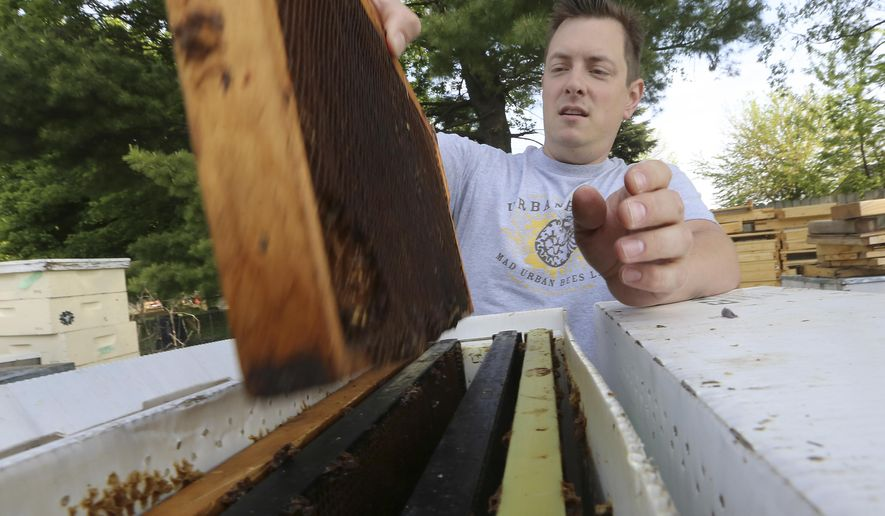 In this Monday, May 23, 2016 photo, Nathan Clarke, owner of Mad Urban Bees views a bee hive frame used for a former colony in the backyard of his home in Madison, Wis. ( John Hart/Wisconsin State Journal via AP) MANDATORY CREDIT