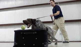 In this Thursday, June 9, 2016, photo, Transportation Security Administration dog trainer Mitchell Brown works with Atilla, a bomb-sniffing dog, in a makeshift luggage area at Lackland Air Force Base training facility in Texas. Short-staffed and often criticized, the TSA aims to improve training for airport screeners. (AP Photo/Eric Gay) **FILE**