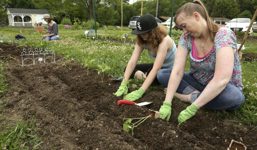 In this June 4, 2016 photo, Victoria Dugar, right and her daughter Alyssa Pishotta plant green beans in their garden at the Nunda Township Garden plots in Crystal Lake, Ill. Residents learn to grow their own vegetables through Garden Connect, a pilot program launched by the Northern Illinois Food Bank, The U of I Extension and community partners, including the McHenry County Department of Health. (John Konstantaras/Northwest Herald via AP)   MANDATORY CREDIT; CHICAGO TRIBUNE OUT