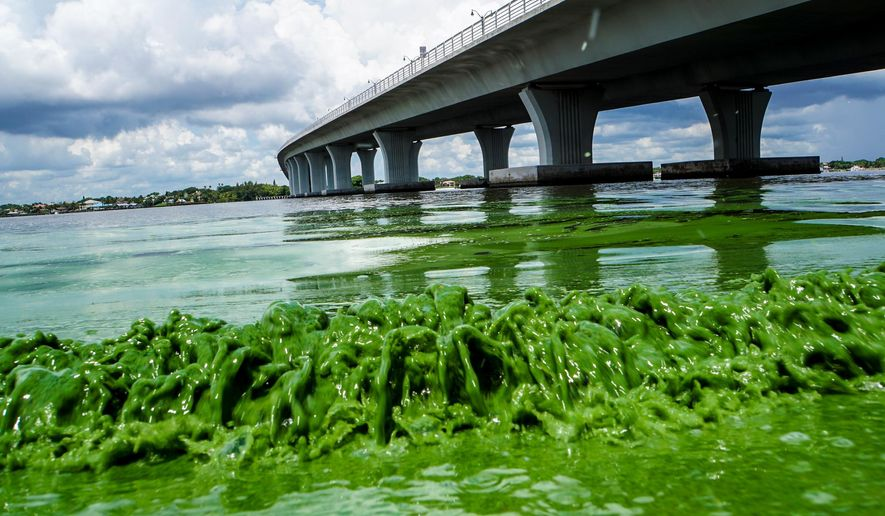 Water full of algae laps along the Sewell's Point shore on the St. Lucie River under an Ocean Boulevard bridge, Monday, June 27, 2016. The Martin County Commission decided at an emergency meeting Tuesday to ask state and federal authorities to declare a disaster where blue-green algae has closed beaches. County officials on Florida's Atlantic coast want the U.S. Army Corps of Engineers to close the locks between Lake Okeechobee and the St. Lucie River.  (Richard Graulich/The Palm Beach Post via AP)