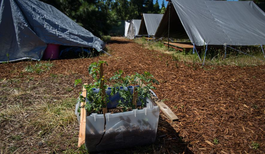 In this Wednesday, June 29, 2016 photo, tomato plants in a plastic box offer a modest start for a garden at a new camp for homeless women in Eugene, Ore. The camp is the fourth Safe Spot Community opened and operated by Community Supported Shelters for homeless citizens in the Eugene and Springfield area. (Brian Davies/The Register-Guard via AP)