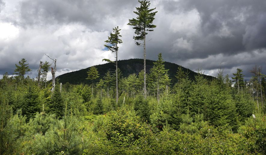 FILE - In this Aug. 5, 2015 file photo, a forest grows back beneath a few uncut white pines several years after it was logged near Soubunge Mountain in northern Maine. In a study of suicide rates by occupation, the workers who killed themselves most often were farmers, lumberjacks and fishermen. Researchers found the highest suicide rates in manual laborers who work in isolation and face unsteady employment. The report from the Centers for Disease Control and Prevention was released Thursday, June 30, 2016. (AP Photo/Robert F. Bukaty)