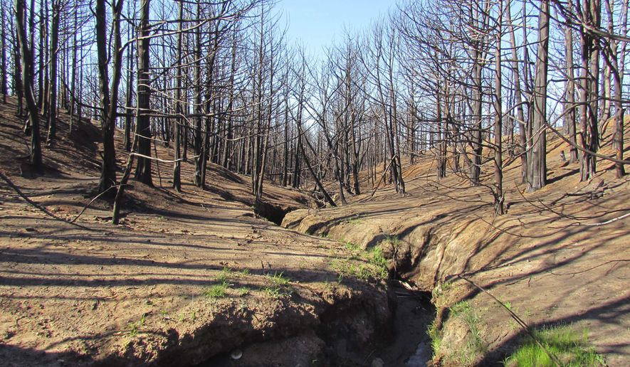 This May 2016 photo provided by Aron Flanders, of the U.S. Fish and Wildlife Service shows reduced eastern red cedar infestation in southern Barber County in Kansas after the Anderson Creek wildfire. The wildfire that scorched nearly 600 square miles of land in Oklahoma and Kansas in March 2016 destroyed homes, killed livestock and damaged thousands of miles of fence. But conservation experts say it also cleared out more eastern red cedar trees in less than a week than local efforts to eradicate the invasive species could have accomplished in decades. (Aron Flanders/U.S. Fish and Wildlife Service via AP)