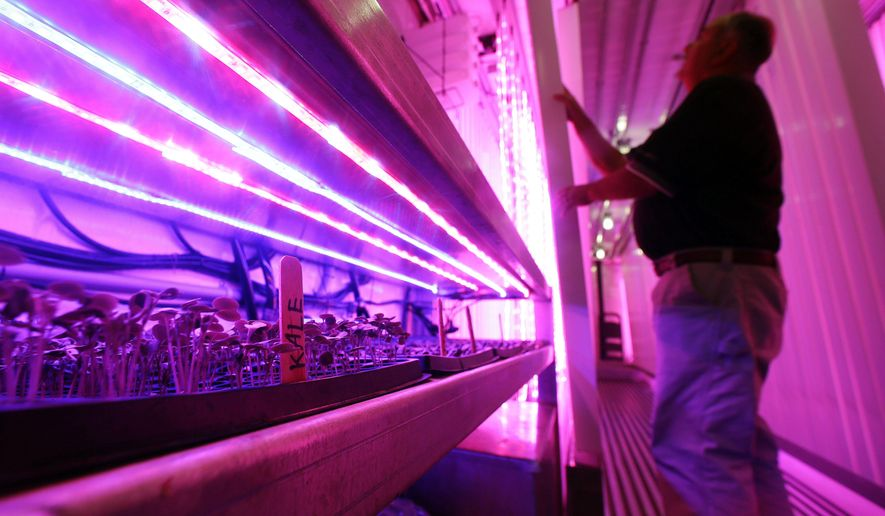 In this June 22, 2016 photo, Don Holman, an engineer at the U.S. Army Natick Soldier Research, Development and Engineering Center in Natick, Mass., adjusts a vertical rack under LED grow lights as kale and other lettuces sprout inside a refurbished shipping container. Holman is testing the idea of growing vegetables hydroponically in a shipping container that could be put on board a submarine to provide fresh vegetables to sailors. (AP Photo/Elise Amendola)