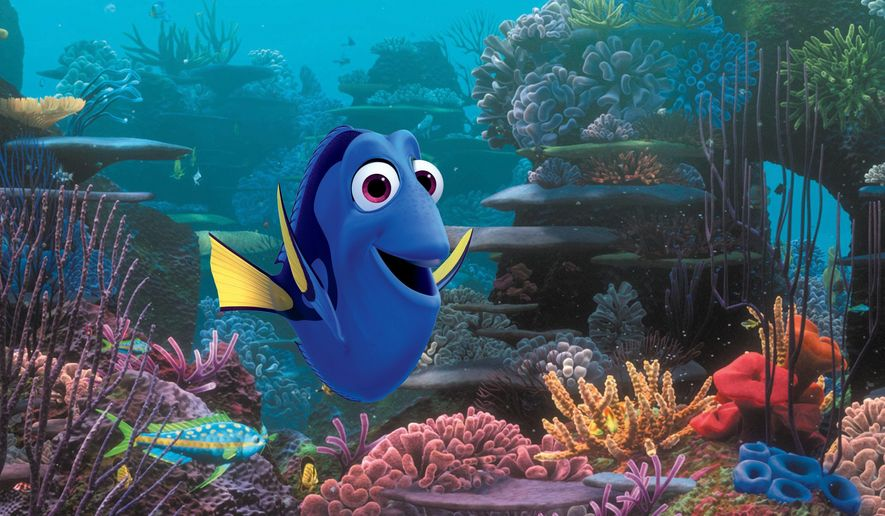 """This undated file image released by Disney shows the character Dory, voiced by Ellen DeGeneres, in a scene from """"Finding Dory."""" In a statement Tuesday, July 19, 2016, researchers at the University of Florida Tropical Aquaculture Laboratory said they had successfully bred Pacific blue tangs in captivity for the first time. The blue species is the model for the forgetful fish featured in the films """"Finding Nemo"""" and """"Finding Dory."""" (Pixar/Disney via AP, File)"""