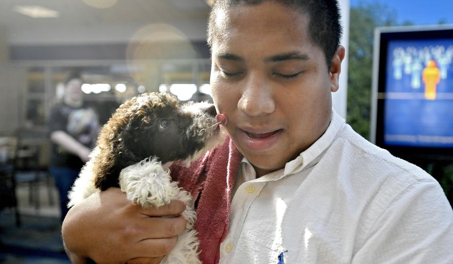 Holden, a standard poodle puppy gives kisses to how new owner Austin Bowen soon after being united at the University Park, Pa., Airport on Wednesday, July 20, 2016.(Abby Drey/Centre Daily Times via AP)