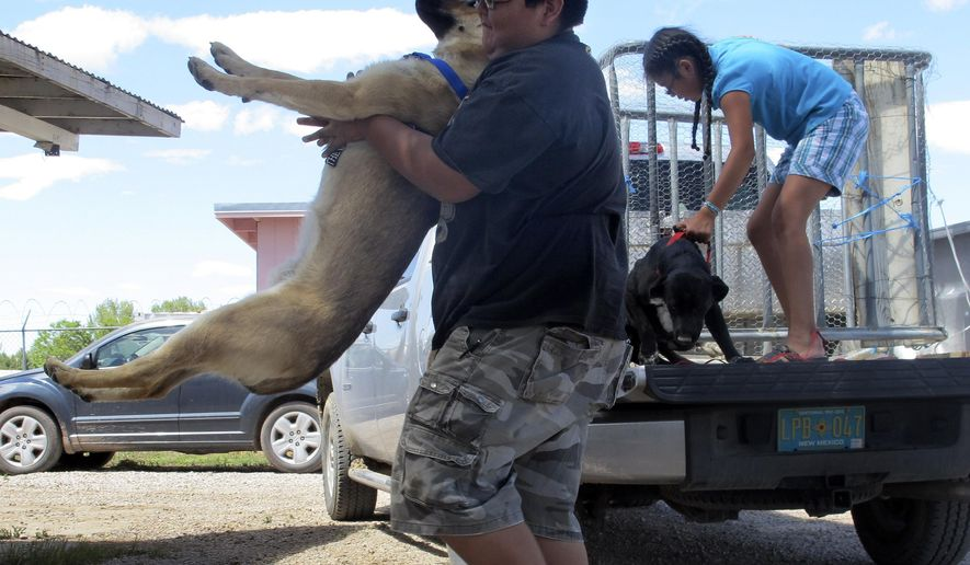 FILE--In this file photo taken July 14, 2011, an unidentified family drops three dogs at a Navajo Nation animal shelter in Fort Defiance, Ariz. for euthanasia after the dogs attacked a neighbor's sheep. Shaken by a vicious dog mauling that killed a 3-year-old boy on the Navajo Nation, local leaders are expressing anger over the attack, saying encounters with stray and feral animals on the vast reservation are all too common and more could have been done to prevent the tragedy. (AP Photo/Jeri Clausing, file)