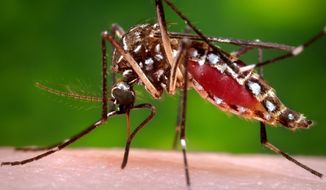 FILE - This 2006 file photo provided by the Centers for Disease Control and Prevention shows a female Aedes aegypti mosquito in the process of acquiring a blood meal from a human host. The Aedes aegypti mosquito is behind the large outbreaks of Zika virus in Latin America and the Caribbean. On Friday, July 29, 2016, Florida said four Zika infections in the Miami area are likely the first caused by mosquito bites in the continental U.S. All previous U.S. cases have been linked to outbreak countries. (James Gathany/Centers for Disease Control and Prevention via AP, File)
