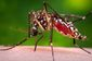 MED-Zika Mosquito-5 Things.JPEG-83d9d.jpg