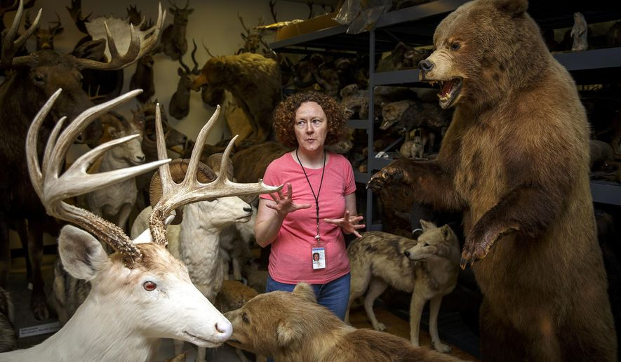 In this Friday, July 22, 2016, photo, Meredith Mahoney, assistant curator of zoology, is one of the tour guides through the zoology section when the public gets a chance to tour the 100,000-square-foot Illinois State Museum Research and Collections Center for one-hour guided tours, on Saturday, July 30. (Justin L. Fowler/The State Journal-Register via AP)