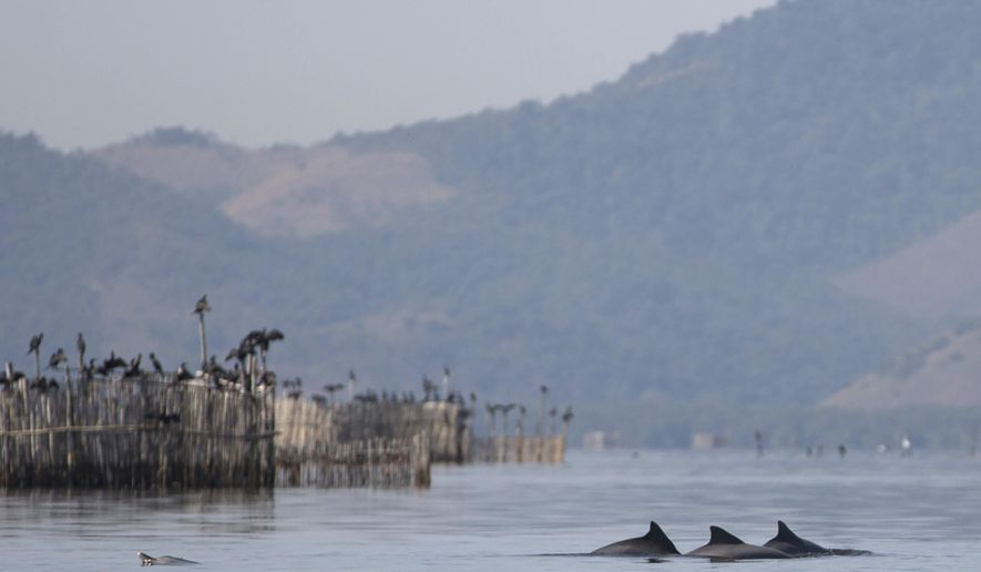 In this  July 15, 2016 photo, a group of Guiana dolphins swim near fish farm pens in Guanabara Bay near Rio de Janeiro, Brazil. Olympic sailors competing in the Rio de Janeiro may navigate through fetid waters and possibly bump into floating trash. But if they are lucky enough, they might also sail past a few dozen dolphins that live in Guanabara Bay. Despite the untreated sewage and toxic industrial pollution that flows into bay waters, 34 Guiana dolphins live, breed and feed in the bay. (AP Photo/Renata Brito)