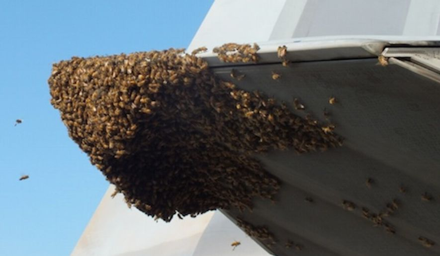 Bees make a new home out of a U.S. F-22 Raptor (U.S. Air Force)