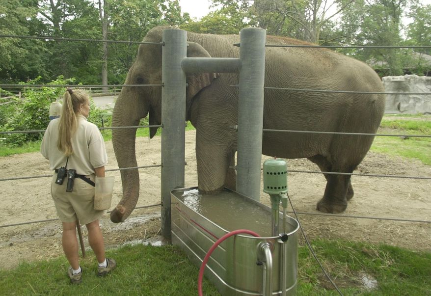 FILE--In this Aug. 23, 2004,  file photo, elephant keeper Mary Wulff keeps the attention of Wanda, an Asian elephant, who is undergoing a whirlpool bath at the Detroit Zoo in Royal Oak, Mich. A new children's book immortalizes Wanda and Winky, former Detroit Zoo elephants who moved to California to live out their final years. Wanda was euthanized in 2015 because of arthritis and foot problems. Winky died in 2008. (AP Photo/Carlos Osorio)