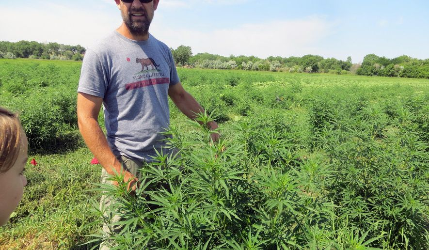 In this June 23, 2016, photo, farmer Will Cabaniss stands with his crop on his 20-acre hemp farm in Pueblo, Colo. Three years into the nation's hemp experiment, the crop's hazy market potential is starting to come into focus. Most of it is being pressed for therapeutic oils, not processed into rope or fabric or more traditional products. Authorized for research and experimental growth in the 2014 Farm Bill, hemp is being grown this year on about 6,900 acres nationwide, according to industry tallies based on state reports. (AP Photo/Kristen Wyatt)
