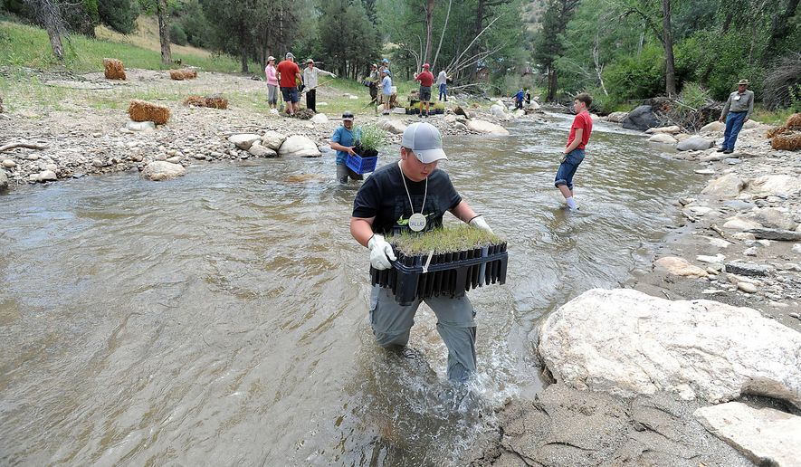 FOR RELEASE SATURDAY, AUGUST 13, 2016, AT 12:01 A.M. MDT.- In this Wednesday, Aug. 3, 2016, photograph, 15-year-old Dallas Patron of Loveland, Colo., carries wetland plug plants across the North Fork River near Drake, Colo., to help restore the river's banks after the flood that roared through the area nearly three years ago. Teenagers from a camp put on by Rocky Mountain Flycasters, the local chapter of Trout Unlimited, joined Wildlands Restoration Volunteers for the project west of Drake. (Jenny Sparks/Loveland Reporter-Herald via AP)