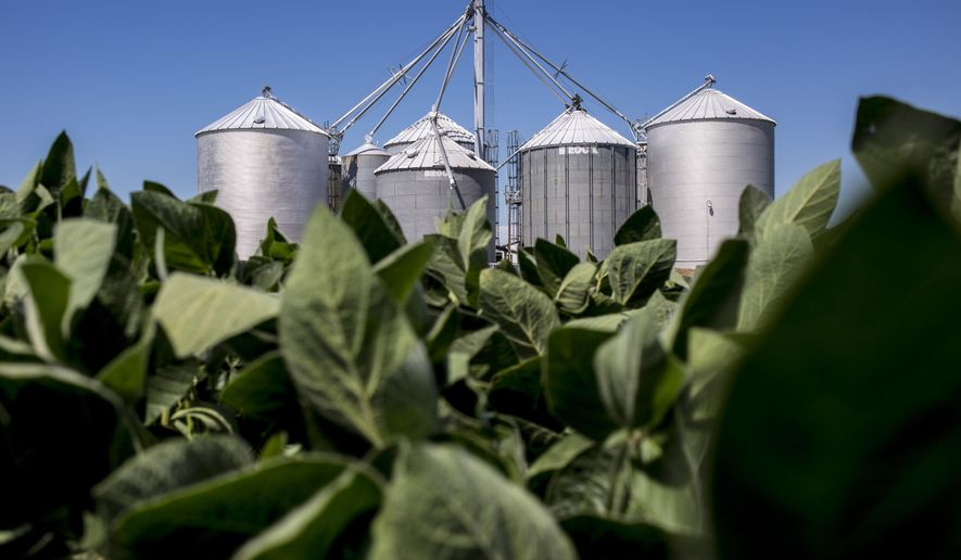 FOR RELEASE MONDAY, AUGUST 22, 2016, AT 12:01 A.M. CDT.- A grain elevator is seen rising above a field of soybeans Aug. 4, 2016 at the Gardner family farm on Galbraith Line Road in Fremont Township, Mich. (Jeffrey M. Smith/The Times Herald via AP)