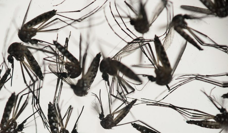 Louisiana's flooding has spurred fears of mosquito-born illnesses, though Zika-transmitting Aedes aegypti mosquitoes are not native to Baton Rouge. (Associated Press)