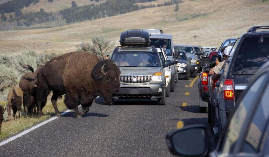 In this Aug. 3, 2016 photo, a large bison blocks traffic in the Lamar Valley of Yellowstone National Park as tourists take photos of the animal. Record visitor numbers at the nation's first national park have transformed its annual summer rush into a sometimes dangerous frenzy, with selfie-taking tourists routinely breaking park rules and getting too close to Yellowstone's storied elk herds, grizzly bears, wolves and bison.  (AP Photo/Matthew Brown)