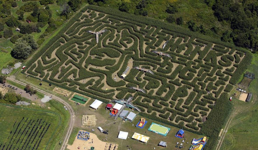 "This aerial view shows a corn maze in the likeness ofBoston Red Sox slugger David Ortiz, Tuesday, Aug. 30, 2016, in Sterling, Mass. The 8-acre maze was created by Davis Mega Maze and features a cornstalk rendering of Ortiz's trademark home run pose of pointing two fingers to the sky. It's accompanied by the phrase ""Thanks Big Papi.""  (Christine Hochkeppel/Worcester Telegram & Gazette via AP)"