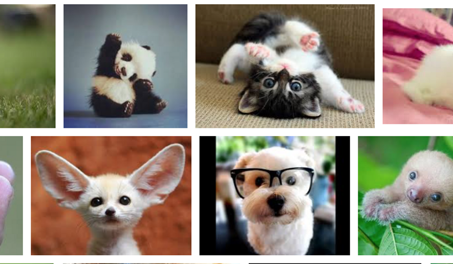 """Some image results for """"cute animals"""" from Google. A new study finds that while men most often share political news online, women most often share news items related to """"cute animals."""""""