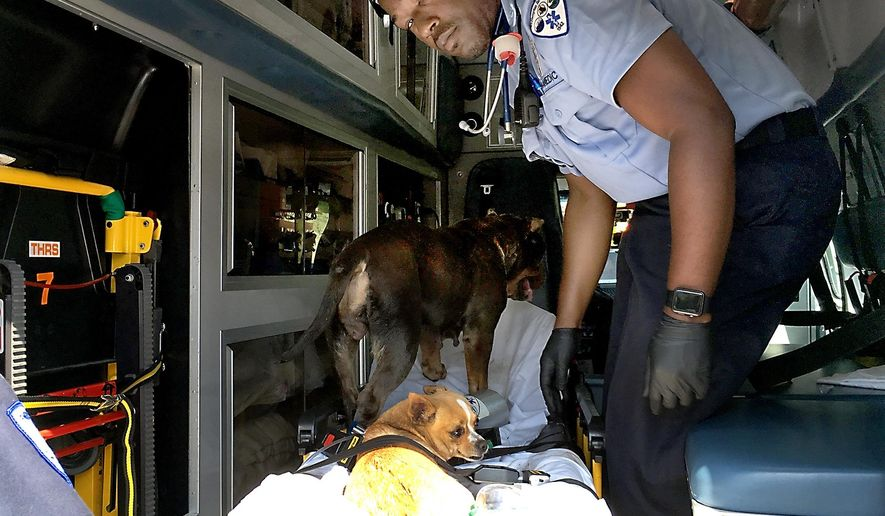 In this Monday, Aug. 29, 2016 photo, EMTs from Tri-Hampton Rescue Squad put dogs on stretchers on an ambulance at the scene of a fire in Northampton, Pa. (Peg Quann/Bucks County Courier Times via AP)