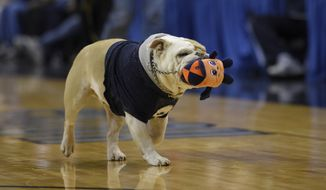 Jack the bulldog carries a stuffed toy in his mouth during the first half of an NCAA college basketball game between Georgetown and Syracuse, Saturday, Dec. 5, 2015, in Washington. (AP Photo/Nick Wass) **FILE**