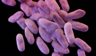 Disease-causing bacteria can gain the upper hand over medicine, Dr. Robin Patel, director of the Mayo Clinic's Infectious Diseases Research Laboratory, said at a panel discussion. (Associated Press/File)