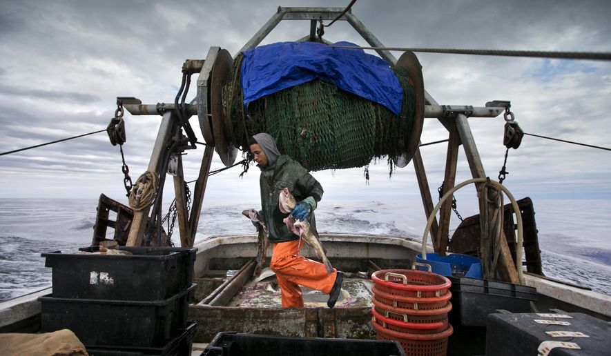 FILE - In this April 23, 2016 file photo, Elijah Voge-Meyers carries cod caught in the nets of a trawler off the coast of New Hampshire. The United States and Canada have brokered a deal to share what's left of the dwindling North American cod fishing business in the Atlantic next year. The two fisheries overlap in the eastern reaches of Georges Bank, an important fishing area located off of New England. (AP Photo/Robert F. Bukaty, file)