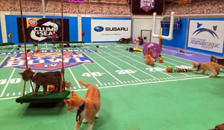 Kittens run around a miniature football field on Wednesday, Sept. 28, 2016, during the taping of Kitten Bowl IV in New York, an annual special that airs on the Hallmark Channel each Super Bowl Sunday. (AP Photo/Leanne Italie)