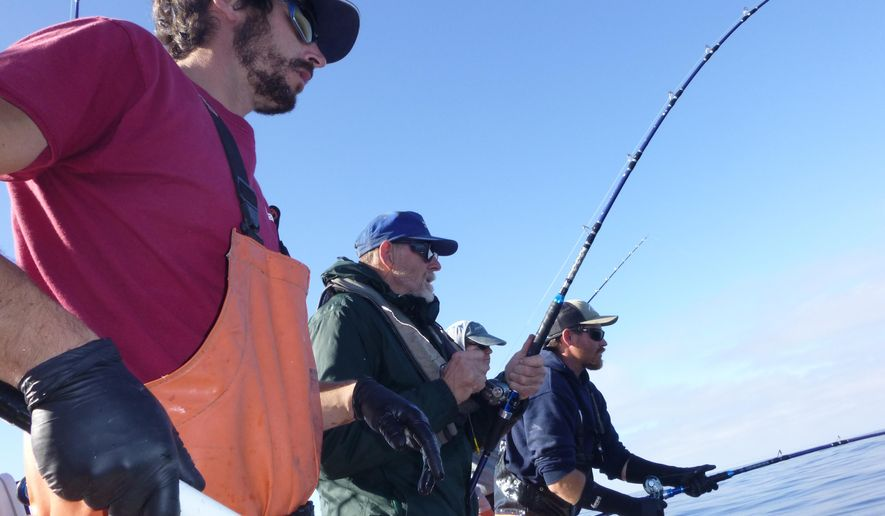 In this Sept. 19, 2016, photo, Capt. Mark Coleman coaches his group on an All Rivers and Saltwater Charters trip out of Westport, Wash. Multiple hookups are the norm when tuna boats get their anglers into a bite. (Rich Landers/The Spokesman-Review via AP)