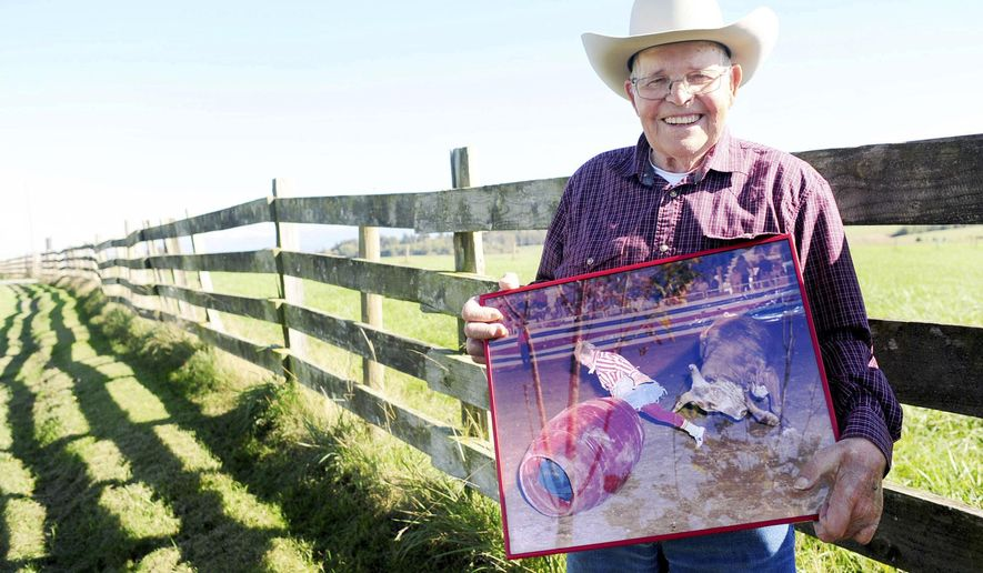 Wick Peth poses for a portrait on is farm in Bow while holding a photo of himself during his bullfighting days, where he is being chased around a rodeo arena by a bull. Peth, 86, will be inducted into the National Cowboy Museum in Oklahoma City.  (Brandy Shreve  /Skagit Valley Herald via AP)