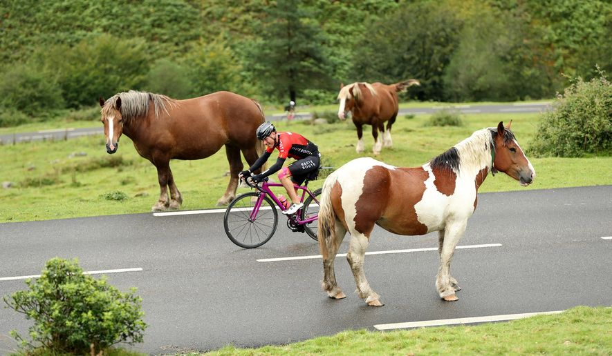 In this Aug. 20, 2016 photo provided by OC Sports, a cyclist makes his way between horses during the first day of the 2016 Haute Route Pyrenees timed cycling event in France. Some 400 cyclists participated in the event, which covered 500 miles (800 km) in seven stages through the French Pyrenees from Anglet to Toulouse with more than 60,000 feet (20,000 m) of climbing. (Haute Route/Yoann Obrenovitch/OC Sports via AP)
