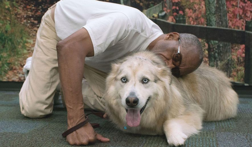 In this Sept. 27, 2016 photo, Clallam Bay Corrections Center inmate Charles Graves greets Sky, a Pyrenees/husky-mix, during a reunion in Clallam Bay, Wash. The dog was part of a program at the prison sponsored by the Sequim, Wash.-based Welfare for Animals Guild to rehabilitate problem dogs. (Brian Harmon/The Peninsula Daily News via AP)