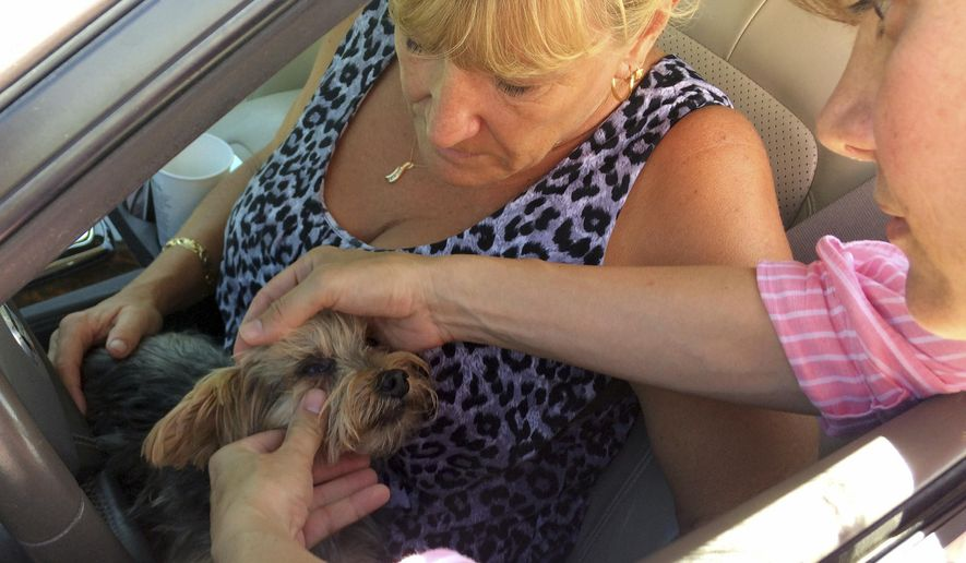 In this Oct. 10, 2016 photo, Rhonda Williams of Cudjoe Key, Fla., has her Yorkie named Riley examined by  Natalie Wendling, a veterinarian with the U.S. Department of Agriculture's Animal and Plant Health Inspection Service, at a roadside checkpoint in Key Largo, Fla. Agriculture officials are checking all animals exiting the keys for signs of New World screwworm. The parasite has killed dozens of endangered deer in the Florida Keys and officials hope to stop screwworm from spreading to livestock and pets on the mainland. (AP Photo/ Jennifer Kay)