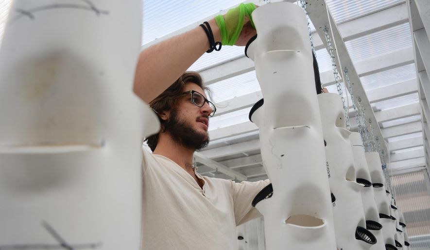 Joe DiPietro, a University of Pittsburgh student. installs the Aquaponics Project, a partnership of Pitt's Innovation Institute and the Door Campaign on Oct. 11, 2016 in Pittsburgh. Starting in November and over the next year, Pitt students will work on the aquaponics lab to make it the most efficient environment they can.  (Lake Fong/Pittsburgh Post-Gazette via AP)