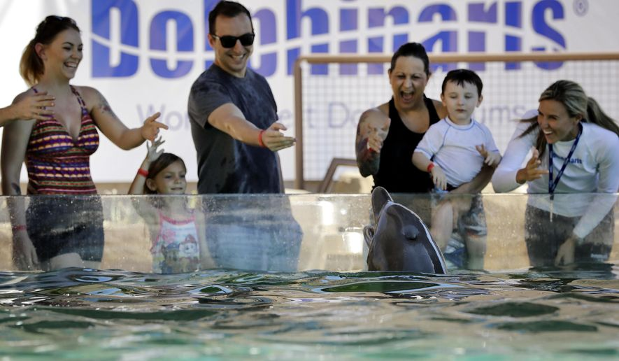 ADVANCE FOR FRIDAY, OCTOBER 14, 2016 AND THEREAFTER - Guests interact with a dolphin, Thursday, Oct. 13, 2016 at Dolphinaris in Scottsdale, Ariz. Arizona's first dolphin attraction has already made a splash before its opening, drawing protests online and at its doors. Mexico-based Dolphinaris is showcasing five bottlenose dolphins at time when the public opinion has become more negative toward animals in captivity. (AP Photo/Matt York)