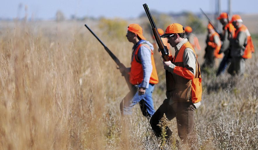 FILE - In this Oct. 18, 2014 file photo, pheasant hunters work an area of grassy cover at the Waterfowl Production Area land near Colman, S.D. Pheasant hunting season opens Saturday Oct. 15, 2016 in South Dakota, a state known far and wide for its bounty of the prized upland game bird. The season draws hunters from around the world, and it rarely disappoints. (Joe Ahlquist  /The Argus Leader via AP, File)
