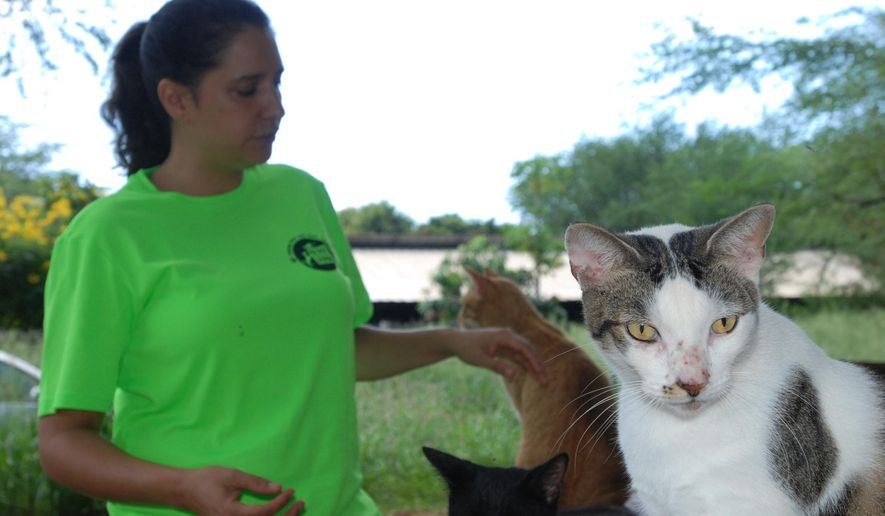 Chris Allejo, the director of operations for the spaying and neutering program run by the animal welfare group Poi Dogs and Popoki, pets cats at feral cat colony near Honolulu on Thursday, Sept. 15, 2016. Conservationists are concerned about the number of feral cats roaming Hawaii because cat feces washing into the ocean can spread toxoplasmosis, which can be deadly for endangered Hawaiian monk seals. (AP Photo/Audrey McAvoy)