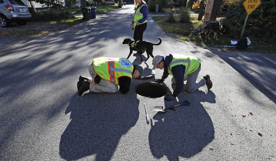 In this Tuesday, Oct. 11, 2016, photo, Scott Reynolds of Environmental Canine Systems, left, and Fred Dillon, the stormwater program coordinator for the city of South Portland, Maine, inspect a stormwater drain pipe in South Portland. Remi, a dog trained to sniff out sources of water pollution, with handler Karen Reynolds, rear, detected human fecal bacteria in the pipe. Many communities across the country are saving time and money by using dogs to find sources of pollution instead of gathering samples to be sent to laboratories for testing. (AP Photo/Robert F. Bukaty)