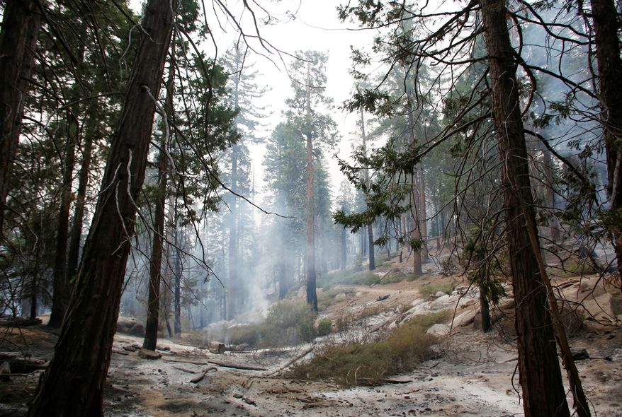 Trees in the Sequoia National Forest in California were charred along the path of a 29,000-acre blaze caused by an illegal immigrant with a long criminal record. (Associated Press)