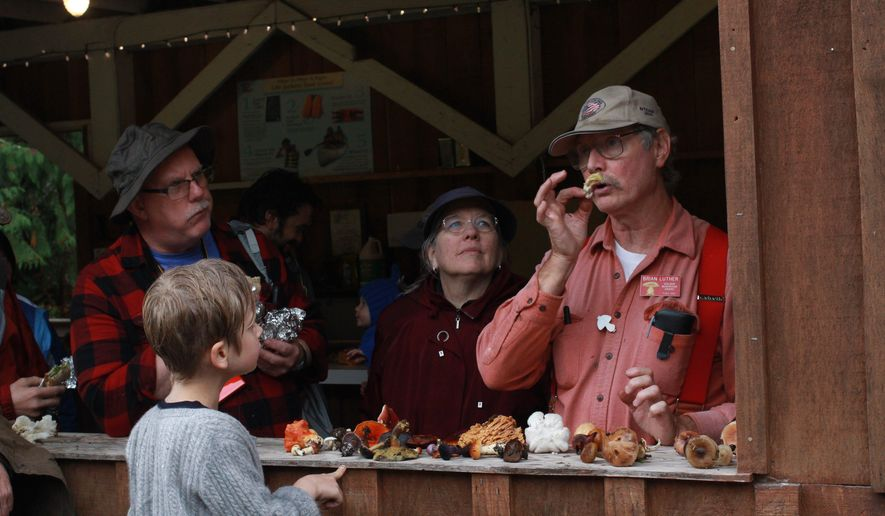 In this Oct. 8, 2016 photo, Brian Luther, Puget Sound Mycological Society identification chairman, takes a sniff of a mushroom near Skykomish, Wash. (Evan Bush/The Seattle Times via AP)