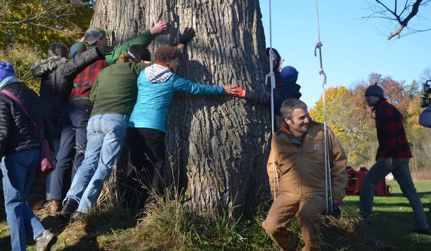 "In this photo taken Tuesday, Nov. 1, 2016, participants in a ""tree hugging ceremony"" gather around an elm tree, believed to be the largest of its kind in New England, before it is cut down in Charlotte, Vt., after the tree died of Dutch elm disease, a fungus that killed millions of elm trees after it arrived in North America in the last century. The wood from the tree will be turned into furniture and other items. The funds will be used to help The Nature Conservancy replant disease resistant elm trees. (Tai Dinnan/Vermont Tree Goods via AP)"