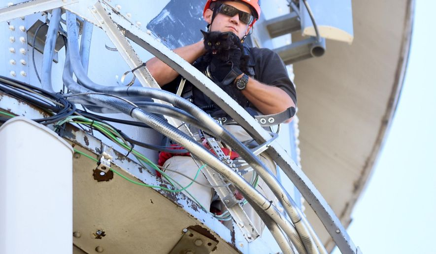 In this Wednesday, Nov. 2, 2016 photo, Brady Thomas, with the Greeley Fire Department, holds on tight to the cat after successfully rescuing from atop of a converted water tower in LaSalle, Colo. The cat has been stranded since Sunday on the top of the tower. The cat was safely rescued Wednesday morning and sent to a nearby veterinarian office to have its well being checked.(Joshua Polson/The Greeley Tribune via AP)