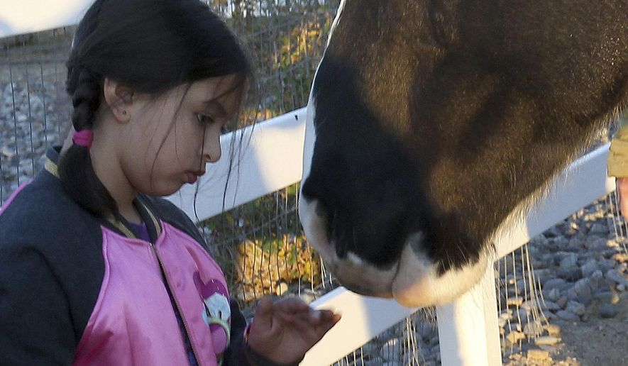 ADVANCE FOR WEEKEND EDITIONS - In this Nov. 7, 2016, photo, Lyza Contreras, 7, has a moment with one of the horses at HopeWest's equine therapy session at a farm north of Grand  Junction, Colo. (Dean Humphrey/The Grand Junction Daily Sentinel via AP)