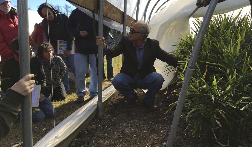 ADVANCE FOR USE SATURDAY, NOV. 26 - In this Nov. 10, 2016 photo, Virginia State University professor Reza Rafie, a horticulture extension specialist, shows gardeners and farmers how ginger is grown in a high tunnel at VSU's Randolph Farm near Petersburg, Va. While Virginia growers average 5 pounds of ginger, occasionally VSU has harvested up to 18 pounds of rhizomes from one plant, he said. (Karin Kapsidelis/Richmond Times-Dispatch via AP)