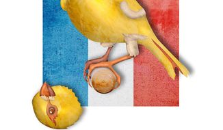 Dutch Canary Illustration by Greg Groesch/The Washington Times