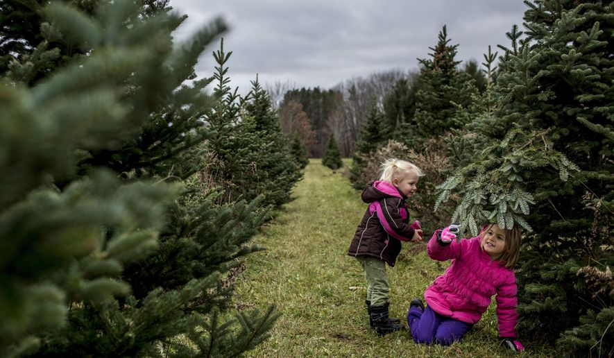 In this Saturday, Nov. 26, 2016 photo, Emilia Sapp, 2, and Eliana Sapp, 6, of Clinton Township, play together while looking for a Christmas tree with their family at Dunsmore Blue Spruce Tree Farm in Smiths Creek, Mich. (Jeffrey M. Smith/The Times Herald via AP)